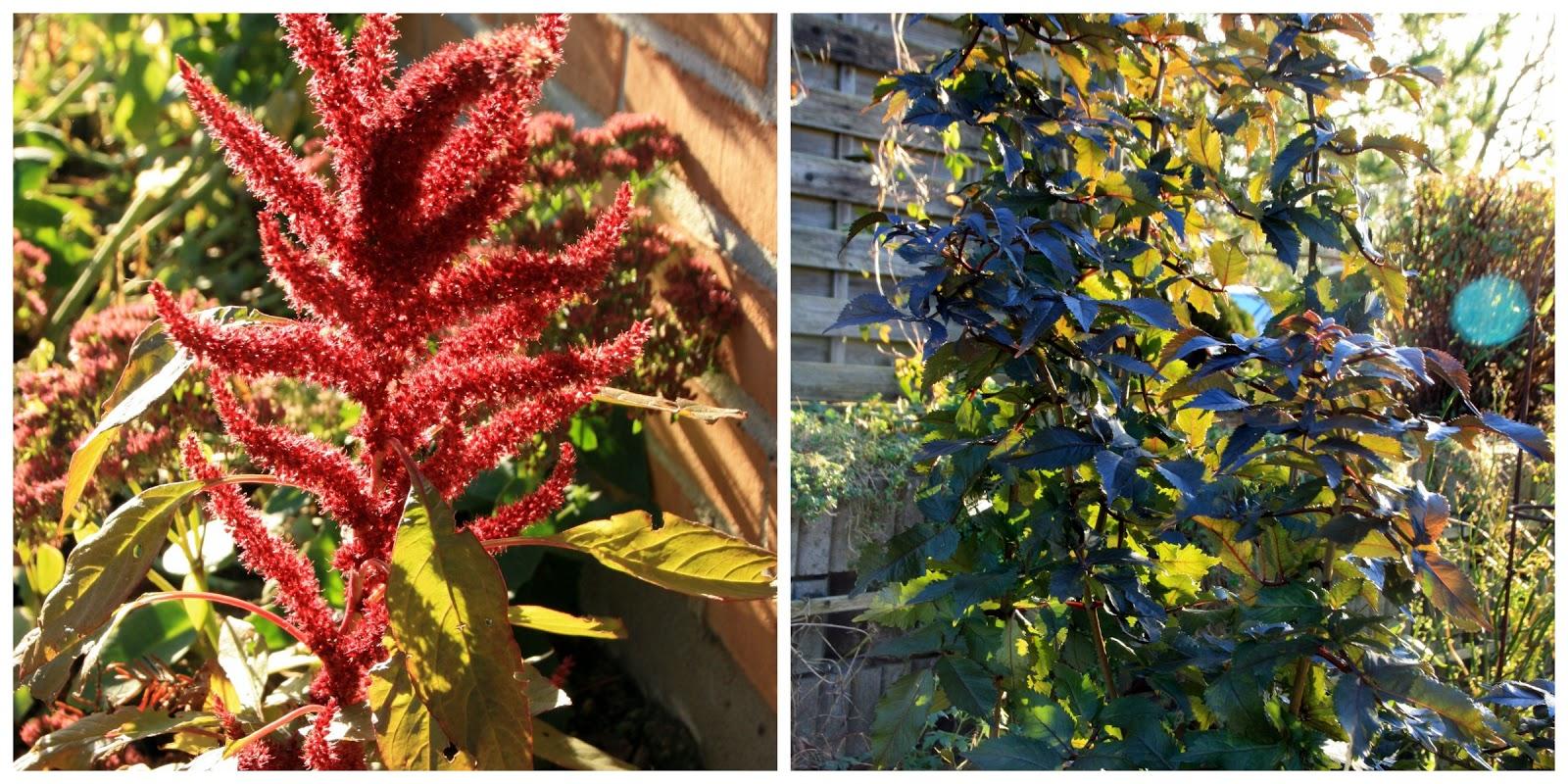 Frk. Anemone: Haven i dag, en solskinsdag i november