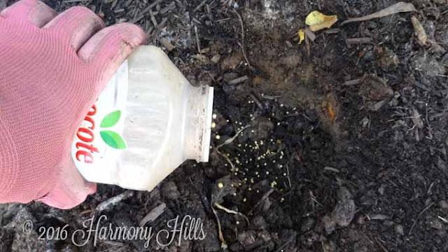 Fertilize the planting hole