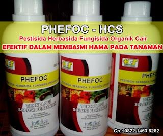 Pestisida Alami Untuk Mengatasi Hama Wereng