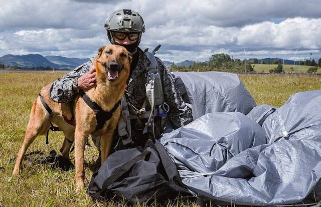 Colombian daredevil dog skydives for military training