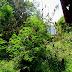 """Lesus """"Sapu"""" Ngawen Belasan Rumah Tertimpa Pohon."""