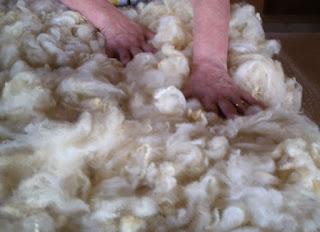 verificando eventuais falhas na distribuição da lã de ovelha