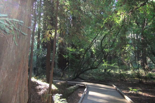 muir-woods-national-monument2 ミュアウッズ国定公園