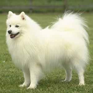 Razas De Perros Perros Hermosos