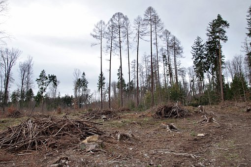 Tasawuf dalam Etika Lingkungan: Sebuah Kajian Sains dan Islam Halimatus Sa'diyah