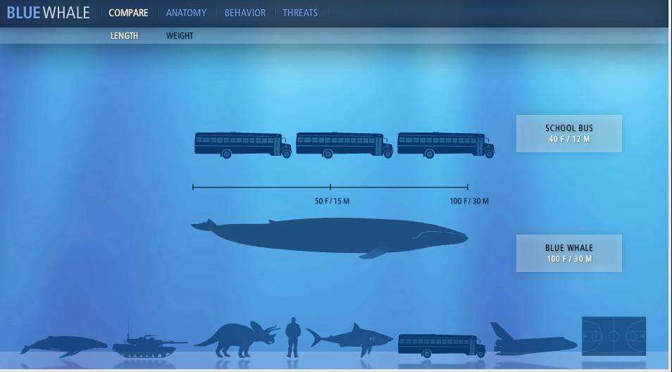 Statistiken verständlich kommunizieren: Blue Whale National Geographic