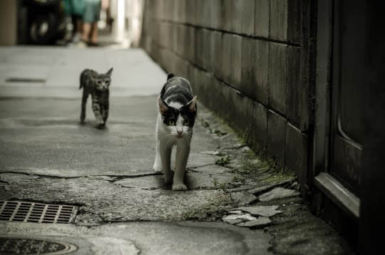 street cats of Kyoto