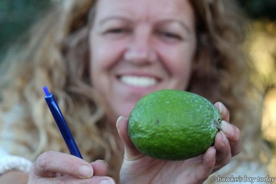 Zara Monrad collected a 230g feijoa from a tree at her home in Hastings. photograph