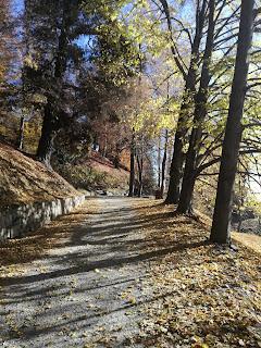 calpestando le foglie autunnali