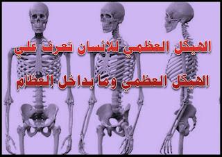 الهيكل العظمي للانسان, الهيكل العظمي ppt, الهيكل العظمي للحيوان, الهيكل العظمي للاطفال, الهيكل العظمي المجنون, الهيكل العظمي من الخلف, الهيكل العظمي للقدم, الهيكل العظمي بالانجليزي