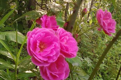 Manfaat Bunga Untuk Kesehatan
