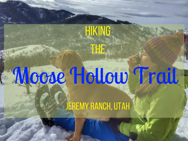 Hiking the Moose Hollow Trail, Park City, Utah, Hiking in Park City with Dogs