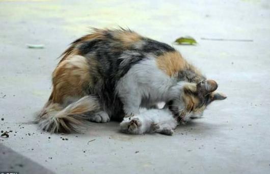 Unduh 92+  Gambar Kucing Lagi Menangis Imut HD