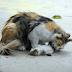 SAYU: Ibu Kucing Mengiau Tanpa Henti Seakan-akan Menangis Melihat Anaknya Ditikam dan Disembelih Putus Kepala Depan Mata!