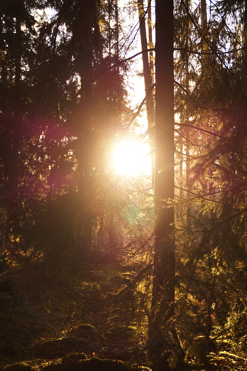 Wintersonne im Wald // winter sun in the forest