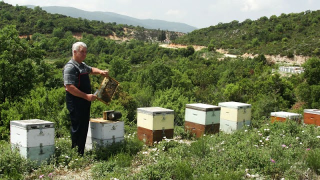 Πως μπορώ να κάνω γρήγορα παραγωγικά τα μελίσσια για να βγάλουν μέλι: Πως γίνονται διώροφα τριώροφα σε μια κακή χρονιά;