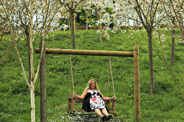 Alnwick Garden Tai Haku Cherry Blossom orchard with UK Plus Size Blogger WhatLauraLoves wearing Yours Clothing