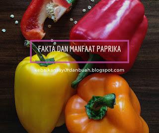 manfaat paprika untuk rambut dan kesehatan