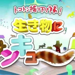 【TV紹介】TBS「トコトン掘り下げ隊! 生き物にサンキュー!!」で愛犬ヴィレッ…
