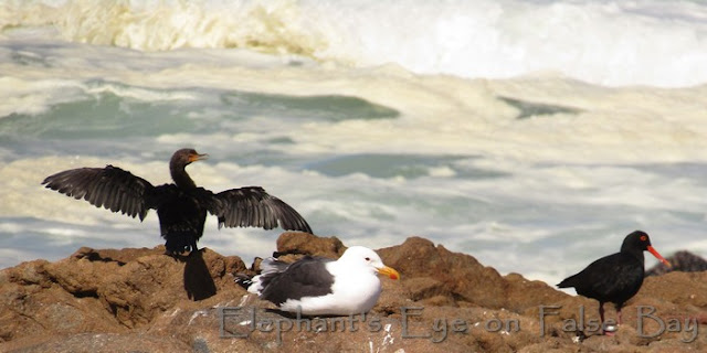 Rough seas and birds at Tsaarsbank