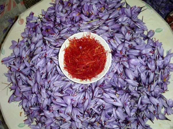 So many flower, so little saffron