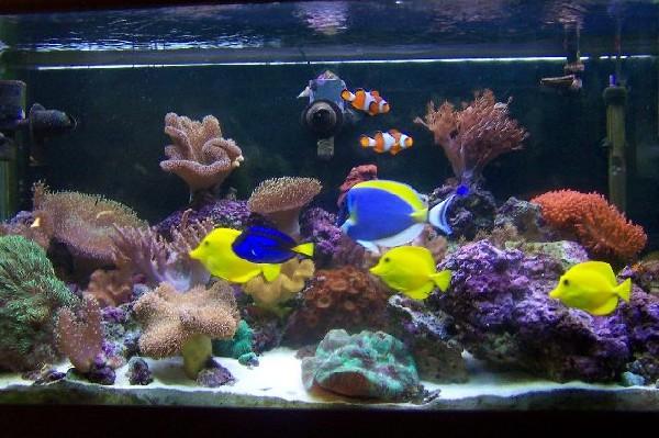 increase the success of saltwater aquarium fish breeding aquarium fish