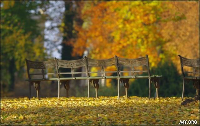 ảnh hàng ghế cuối tháng 9
