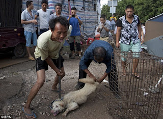 Puppy being skinned alive to be sold as food on the market