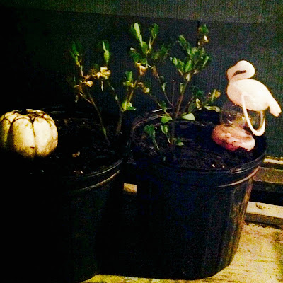 Succulents in container garden with pumpkin and flamingo dollar store decorations