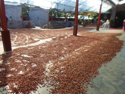 Biji Kampung Coklat Blitar