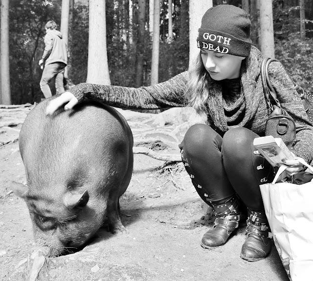 Ich liebe Schweine