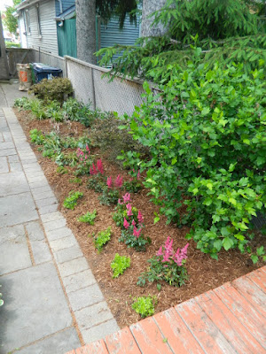 Oakwood Village Toronto backyard garden makeover after by Paul Jung Gardening Services
