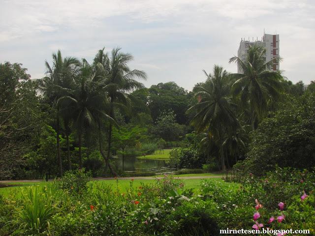 Ботанический сад Сингапура - эко-озеро