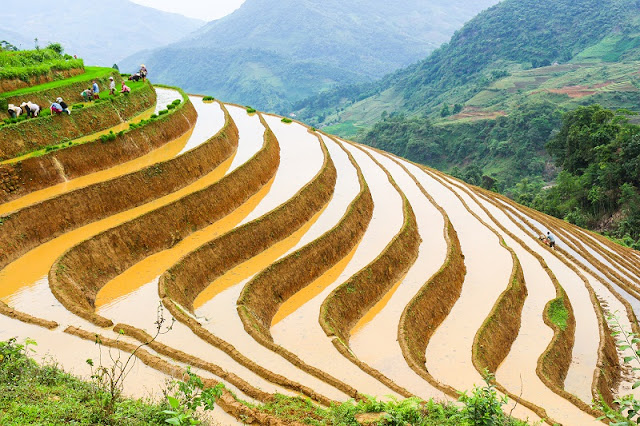 When is the rice harvest in Sapa? 1
