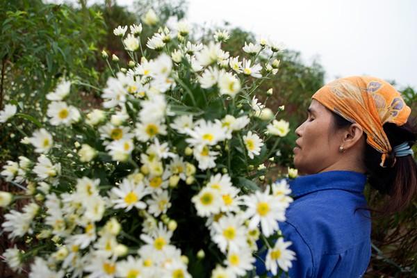 Lang hoa Quang An la mot trong nhung dia diem chup anh cuc hoa mi dep o Ha Noi