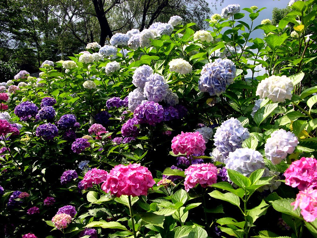 #1 Nice Flowers Garden Wallpapers