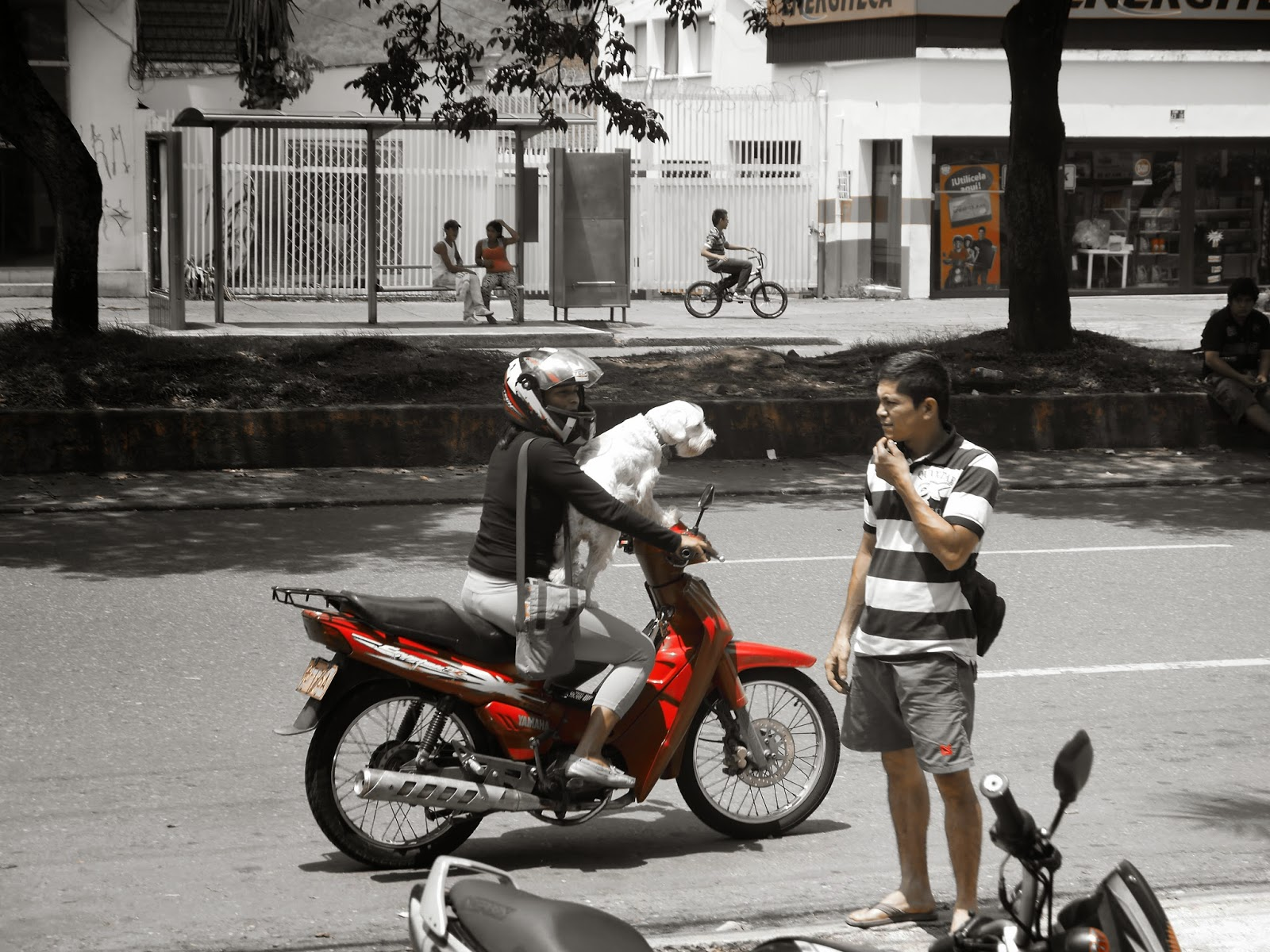 Perro y Moto Ibague