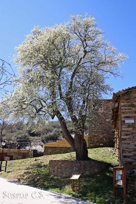 Sierra del Rincón - Madrid