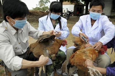Những căn bệnh của gà chúng ta cần biết tên, đặc điểm và cách điều trị