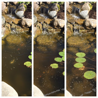 clearing pond water with aerator