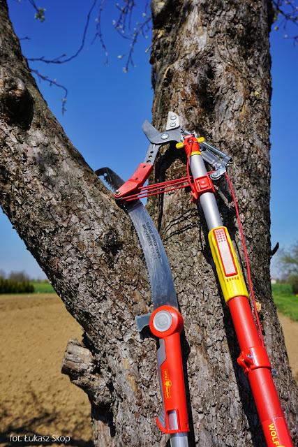narzędzia do cięcia drzew: piła i sekator