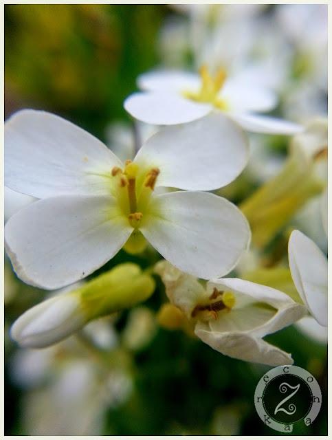 zdjęcia wiosny
