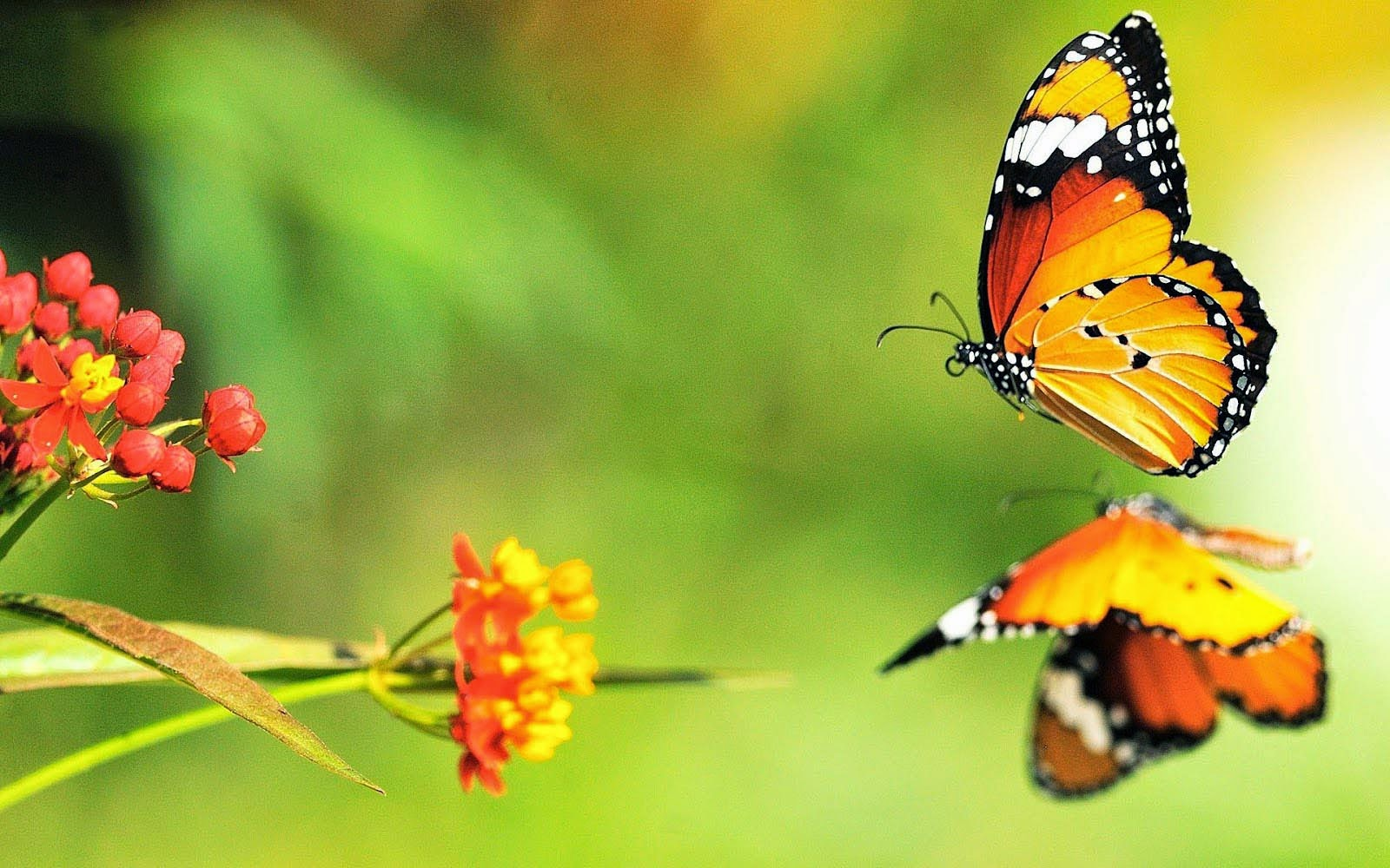 3D Butterfly Desktop Backgrounds