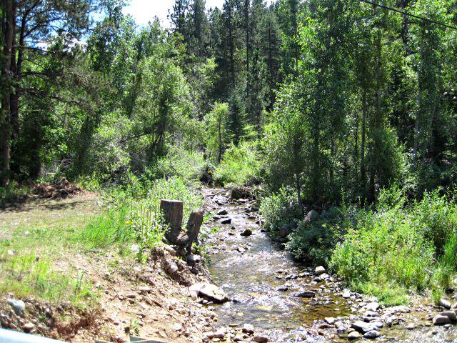 stream through pine trees