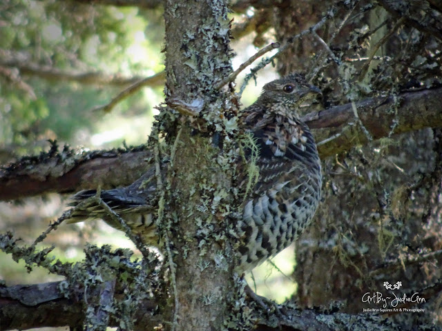 Newfoundland Birds