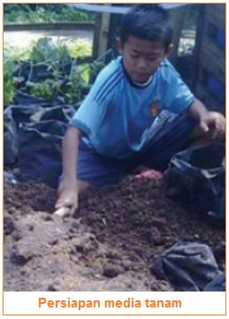 Pengolahan Tanah-Persiapan Media Tanam - Tahapan-Tahapan Budi Daya Tanaman Sayuran
