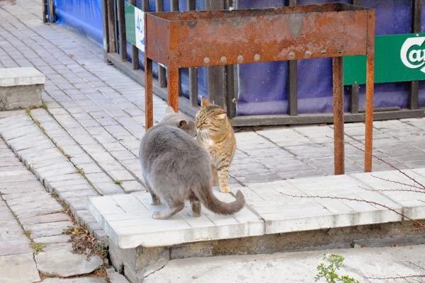 коты здороваются