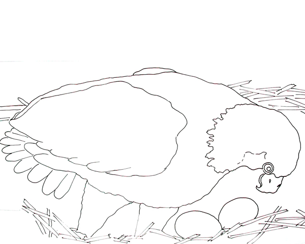 BALD EAGLE AND EGGS Coloring Page