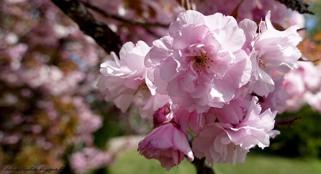 branche en fleurs