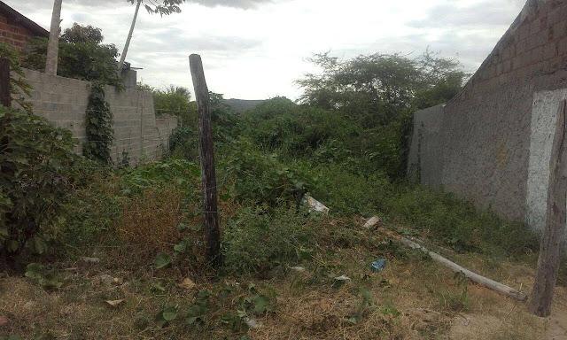 Olho D'Água do Casado: Moradores reclamam de matos alto em terrenos baldios